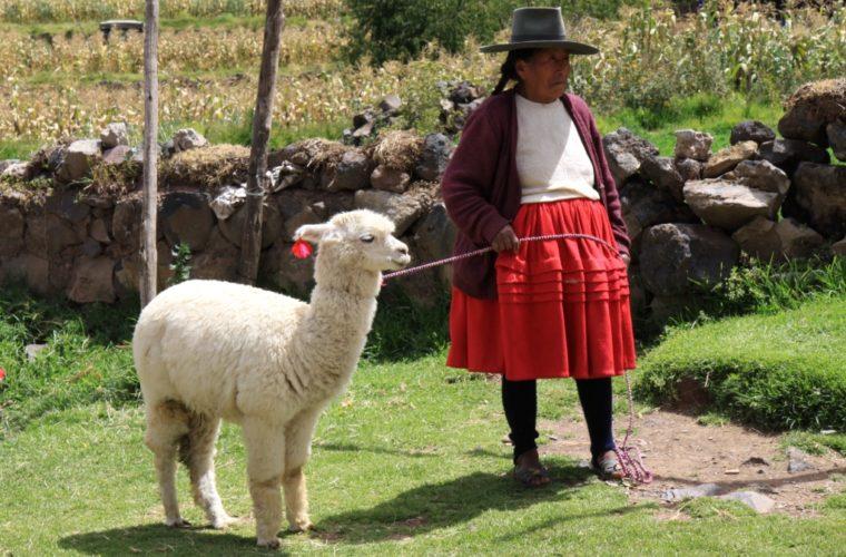 Indianka_s_lamou_Bolivia